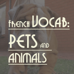 French Vocab: PETS AND ANIMALS