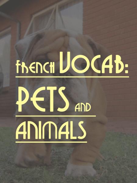 french-vocab-pets-animals