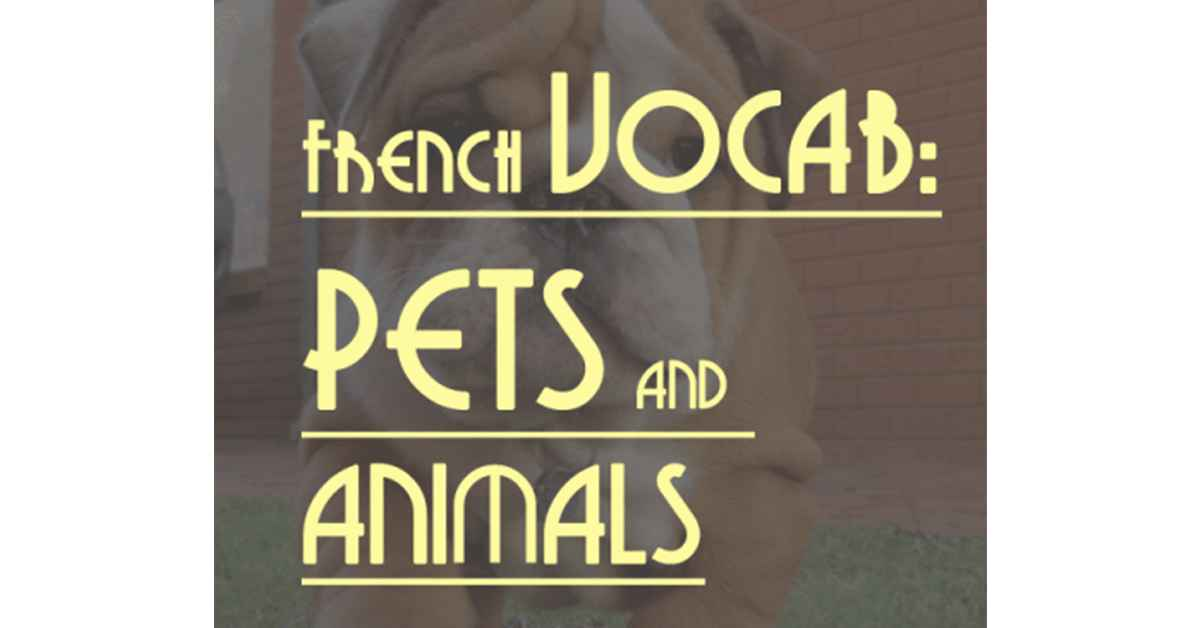 French Vocabulary Pets and Animals