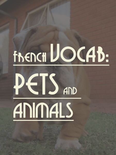 french-vocab-pets-animals
