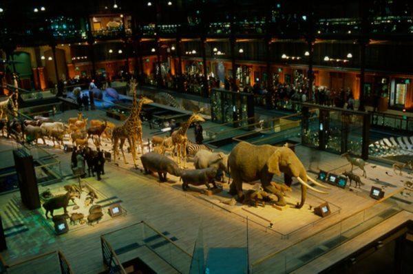 Gallery of Paleontology