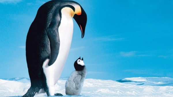 the theme of love in the march of the penguins a film by luc jacquet March of the penguins in the harshest place on earth, love finds a way directed by luc jacquet compare werner herzog's encounters at the end of the world, another antarctic documentary made the very next year tropes of the penguins.
