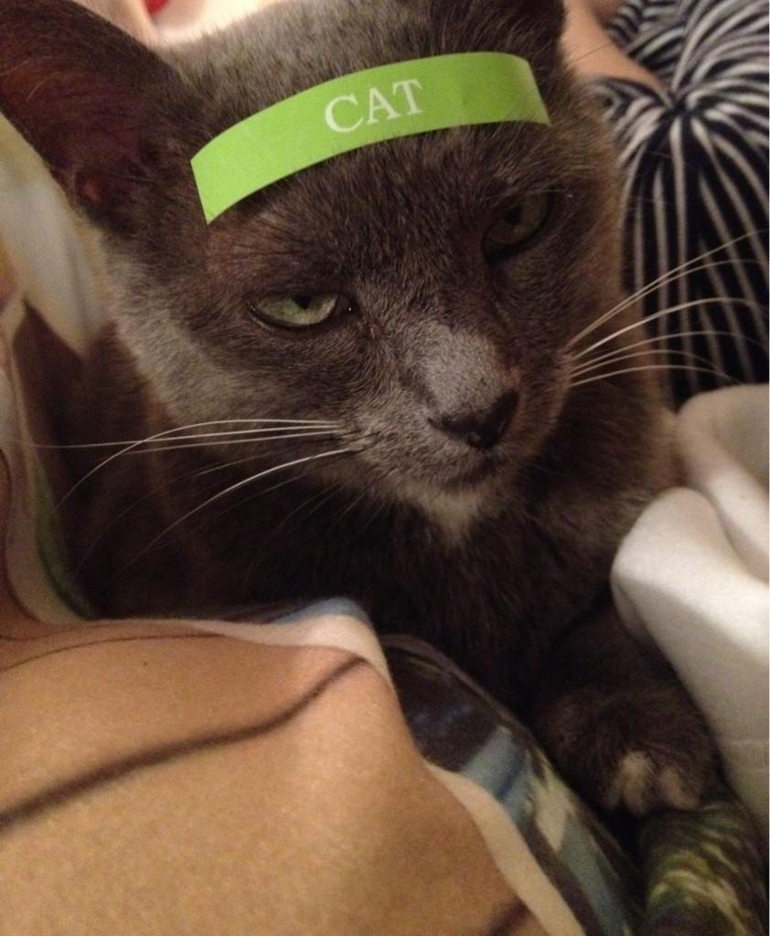 call cat a cat