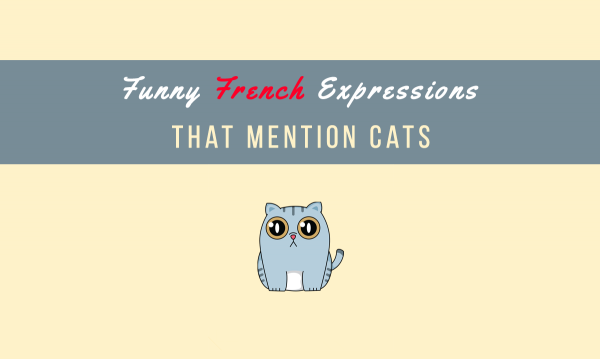 14 French Expressions Featuring Cats 5930f55e758b