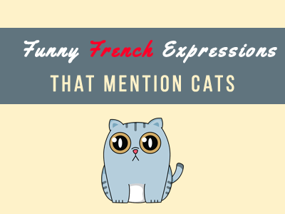 french cats expressions