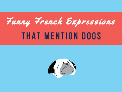 french-dog-th