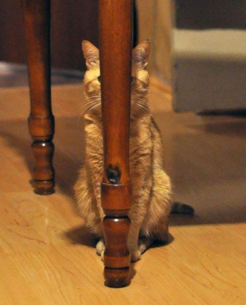 not a cat in sight
