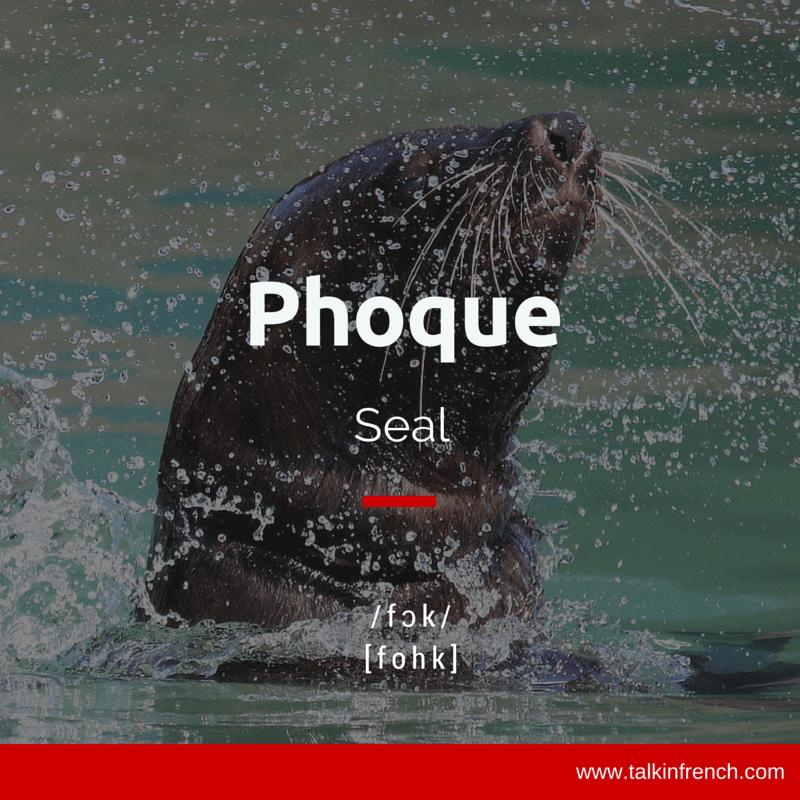 Phoque