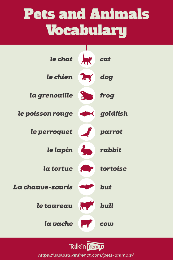 French Vocab Pets And Animals Talk